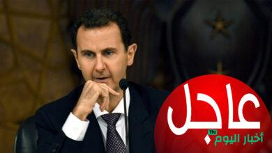 صورة منطقة من قلب الساحل تثـ.ـور على الأسد والأخير يعـ.ـاقبها على الفور