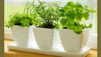صورة بدون مبيدات حشرية.. 6 نباتات تحميك من لسـ.ـعات الصيف المؤلـ.ـمة