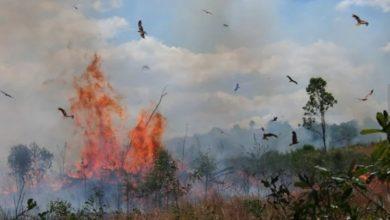"""صورة لماذا """"تحرق الطيور هذا العالم"""" …"""